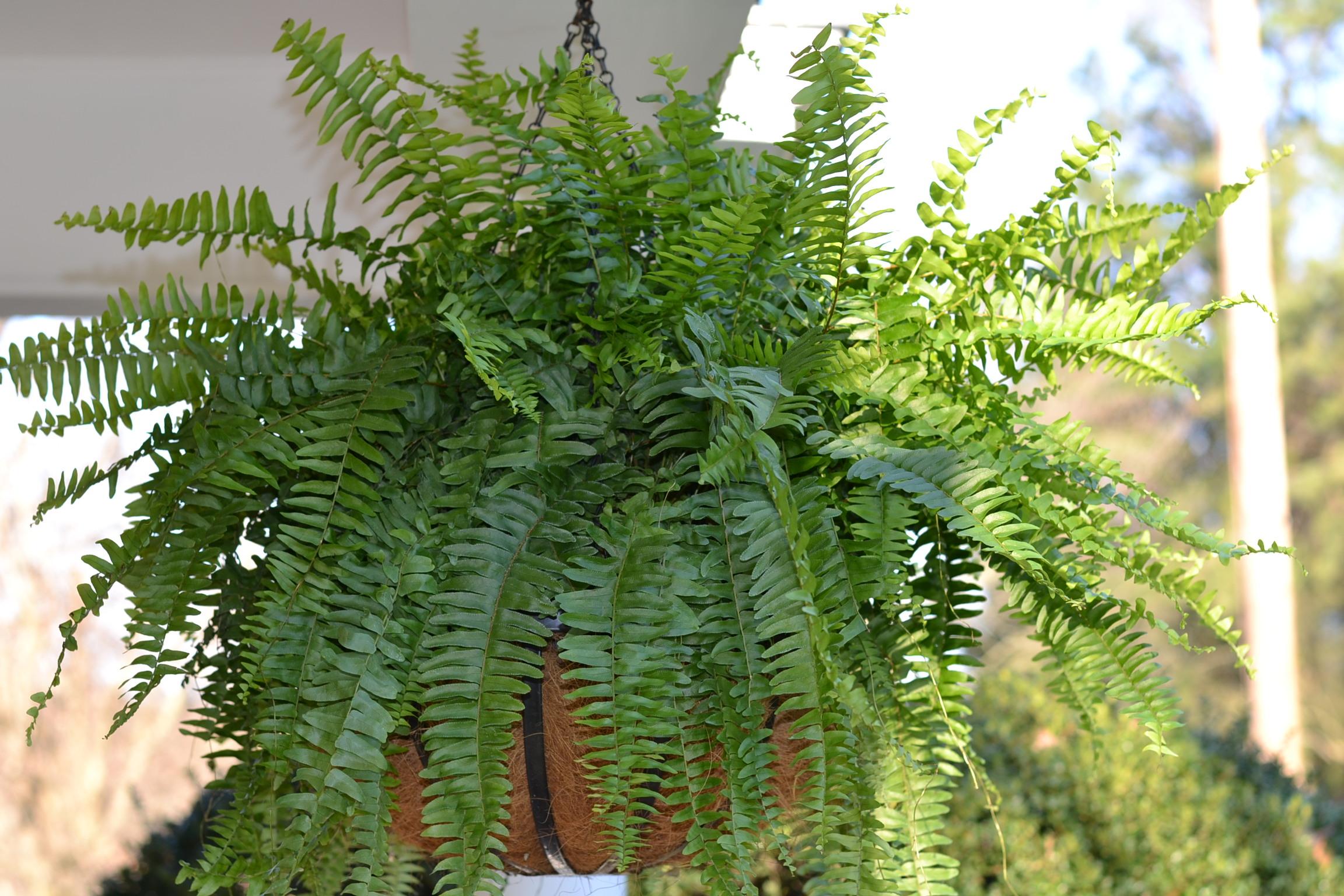 Каталог комнатных растений с