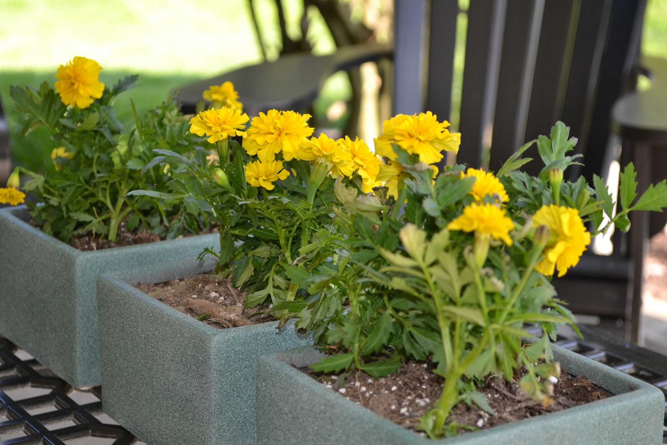 Yellow Flowers And Some Bargain Pots